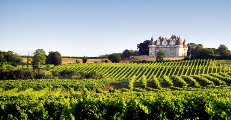 Illustration de l'article Dordogne : Monbazillac, de la vigne aux arbres