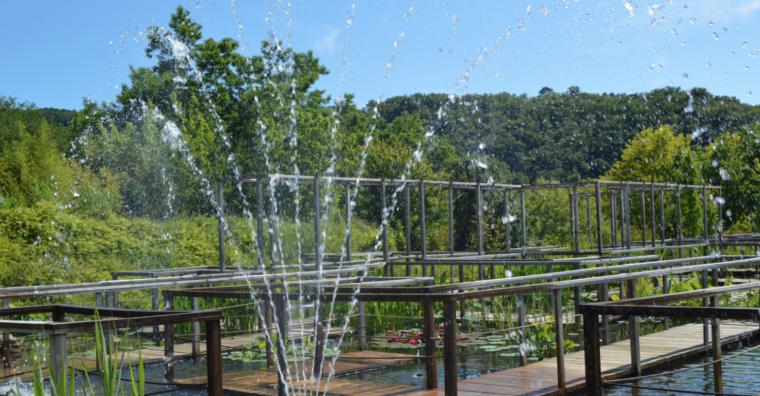 Illustration de l'article Carsac-Aillac : un jardin à « fleur d'eau »