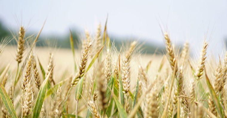 Illustration de l'article [ Nouvelle-Aquitaine ] Stage découverte collégiens : Les agriculteurs ouvrent leurs portes