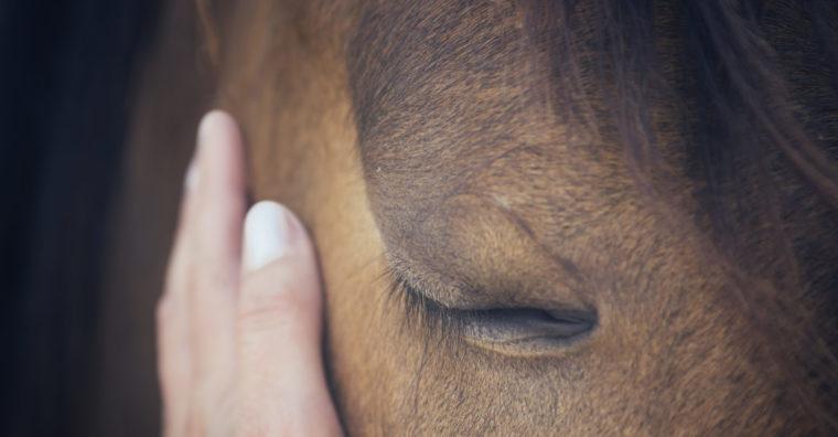 Illustration de l'article Bien-être du cheval : le Domaine de Sauboméa, centre unique en Europe