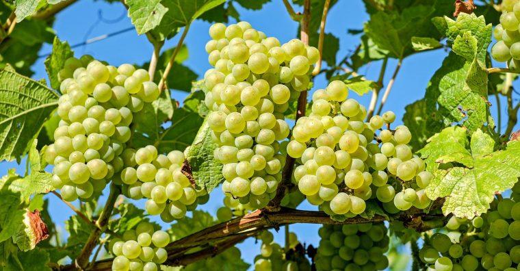 Illustration de l'article [ Lot-et-Garonne ] Croissance externe pour les Vignerons de Buzet